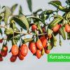 ягоды годжи