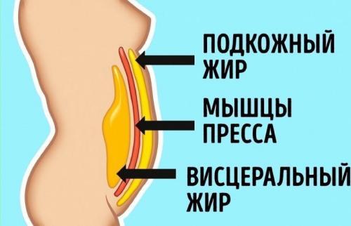 висцеральный жир на животе у женщин