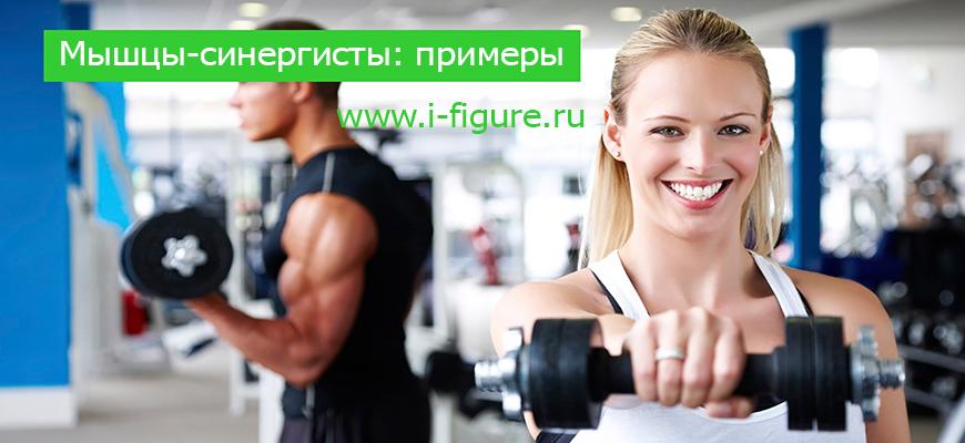 мышцы синергисты