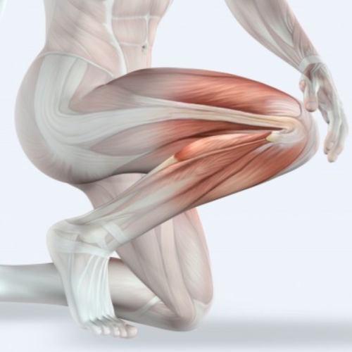 мышцы синергисты_1