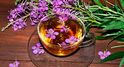 Как правильно заваривать в чайнике и пить иван-чай