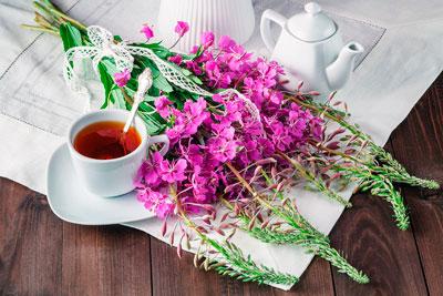 Как правильно пить иван-чай