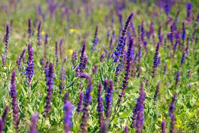 какие травы самые полезные для здоровья