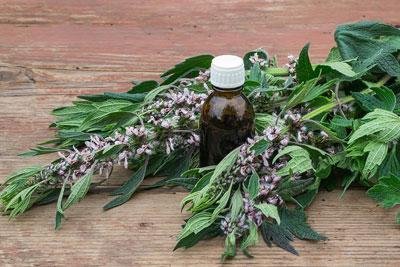 полезные травы для женского здоровья 2