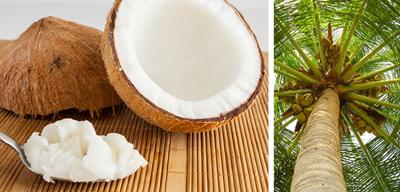 кокосовое масло для похудения внутрь