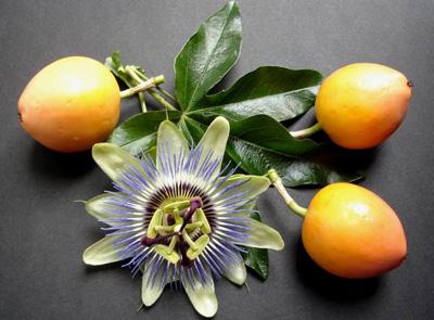маракуйя фрукт полезные свойства